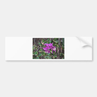 Purple Bougainvillea Photo Bumper Stickers