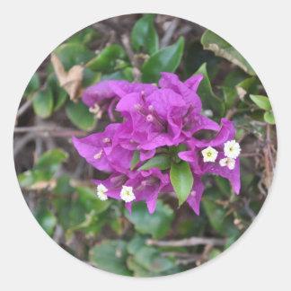 Purple Bougainvillea Photo Classic Round Sticker