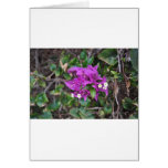 Purple Bougainvillea Photo Greeting Card