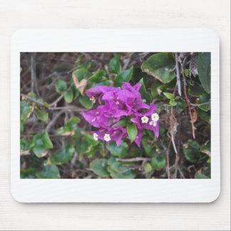 Purple Bougainvillea Photo Mouse Pad