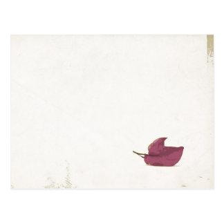 Purple Bougainvillea Post Card
