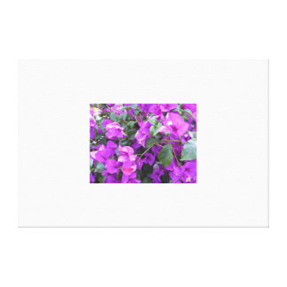 Purple Bougainvillea Wrapped Canvas