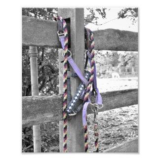 Purple Bridle & Reins Photo Print