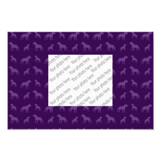Purple bulldog pattern photo print