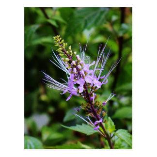 Purple Butterfly Bush Postcard