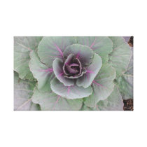 Purple Cabbage Wrapped Canvas Canvas Print