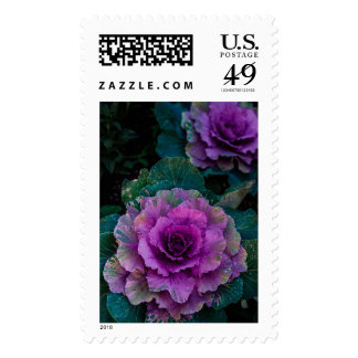 Purple Cabbages, grow like flowers Postage Stamp