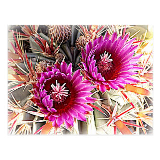 Purple Cactus Bloom Postcard