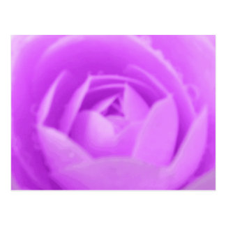 Purple Camellia Postcard