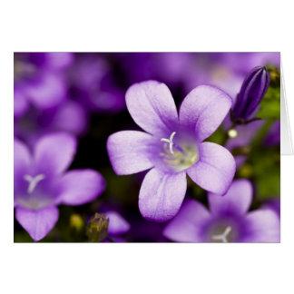 Purple Campanula Greeting Card