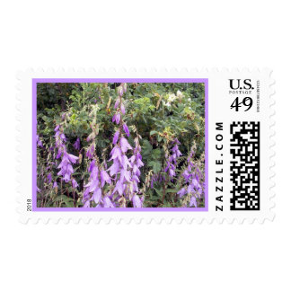 Purple Canterbury Bells 1 Stamp