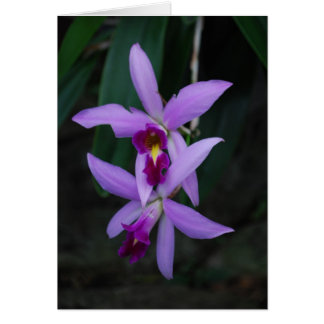 Purple cattleya orchid stationery note card