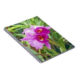 Cattleya Orchids Notebooks Journals Zazzle