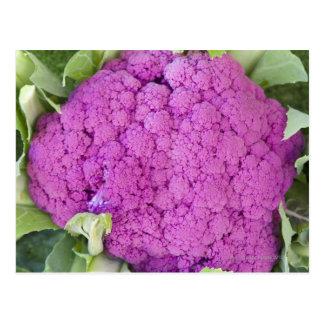 Purple cauliflower for sale postcard