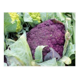Purple Cauliflower Postcard