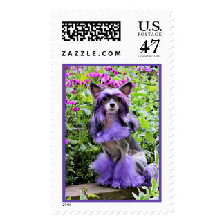 Purple Chinese Crested Dog in Pink Flowers Postage