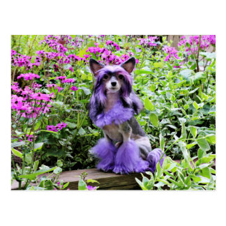 Purple Chinese Crested Dog in Pink Flowers Postcard