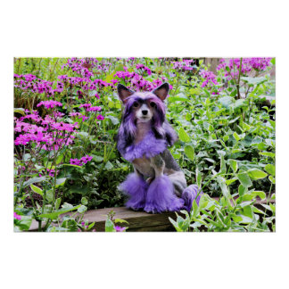 Purple Chinese Crested Dog in Pink Flowers Poster