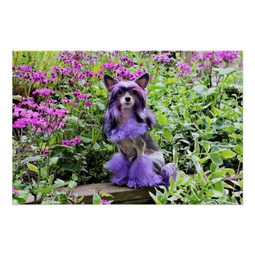 Purple Chinese Crested Dog in Pink Flowers Posters