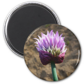 Purple Chive Flower in Bloom 2 Inch Round Magnet