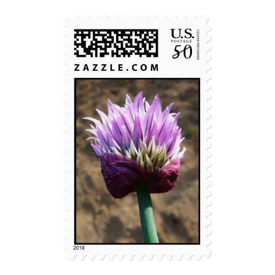 Purple Chive Herb Flower Postage