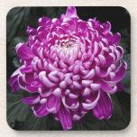 Purple Chrysanthemum Coaster