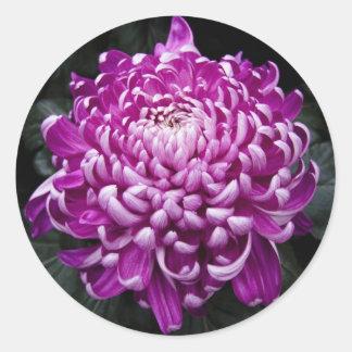 Purple Chrysanthemum Round Stickers