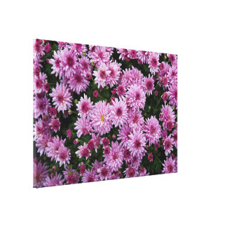 Purple Chrysanthemum X Morifolium Flowers Canvas Print