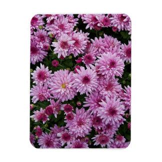 Purple Chrysanthemum X Morifolium Flowers Magnet