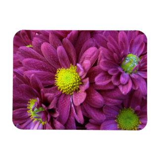 Purple Chrysanthemums Rectangle Magnets