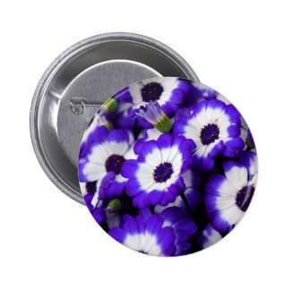 Purple Cinerarias Pins