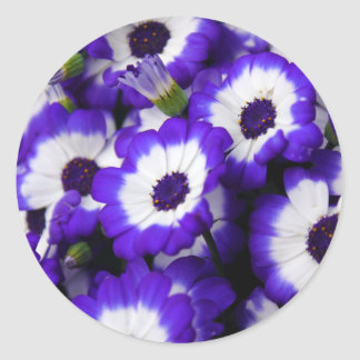 Purple Cinerarias Classic Round Sticker