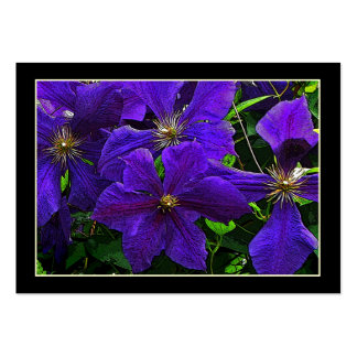 Purple Clematis ATC Large Business Cards (Pack Of 100)