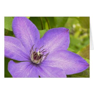 Purple Clematis Greeting Card
