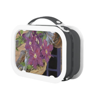 Purple Clematis Lunch Box