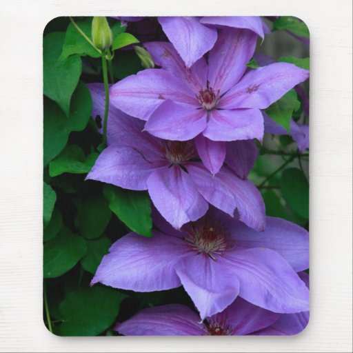"""purple clematis"" mouse pad"