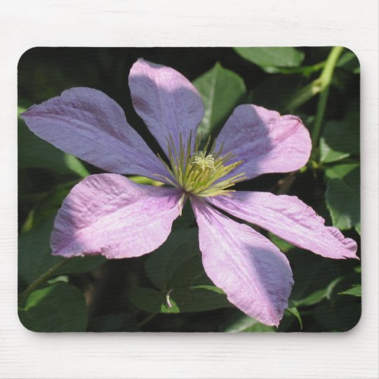 Purple Clematis Mouse Pad