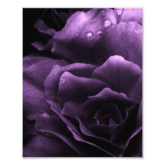 Purple Close Up of a Double Begonia Photo Print