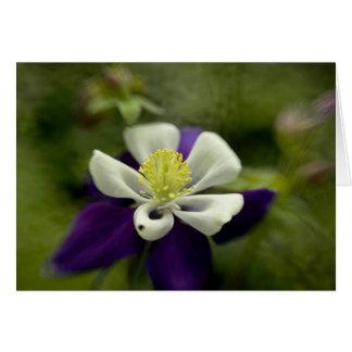Purple Columbine Card