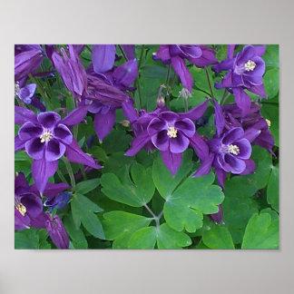 "Purple Columbines -11""x 8.5"" Poster"