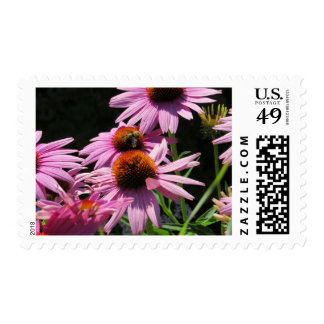 Purple Cone Flowers And Queen Bee Stamp