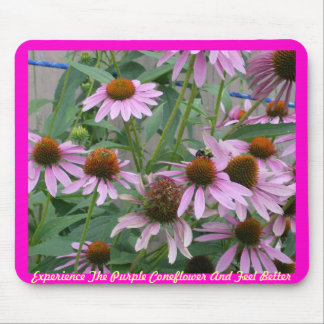Purple Coneflower Blooming Mouse Pad