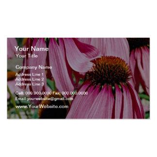 Purple coneflower, echinacea purpurea  flowers Double-Sided standard business cards (Pack of 100)