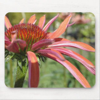 Purple Coneflower Expression Mouse Pad