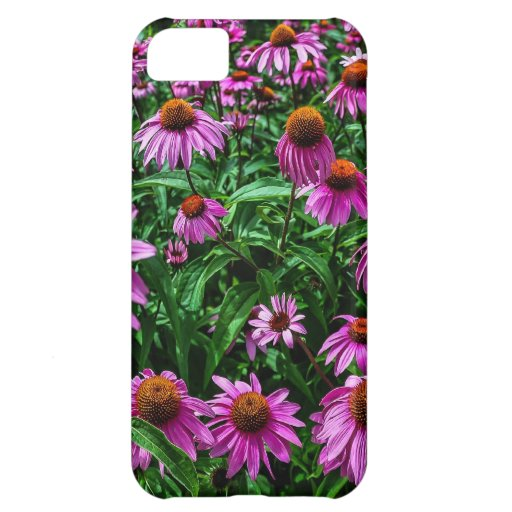 Purple Coneflower Garden iPhone Case Cover For iPhone 5C