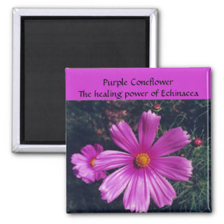 Purple Coneflower - magnet