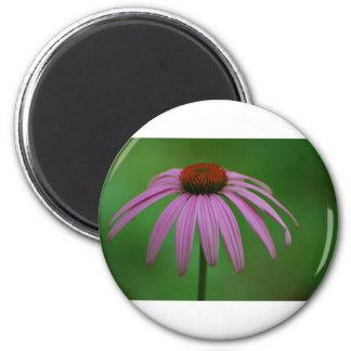 Purple Coneflower Magnets