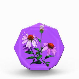 Purple Coneflower On Purple Award