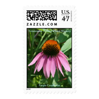 Purple Coneflower Postage Stamps