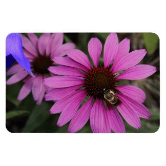 Purple Coneflowers Magnets
